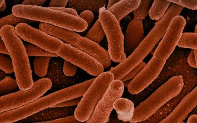 ¿A qué se refieren las bacterias benéficas?